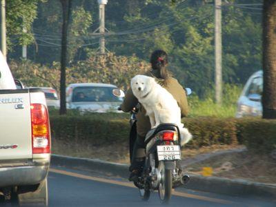 dogonbike.jpg
