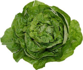 lettuce3.jpg