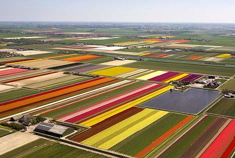 tulipspa0605_468x315