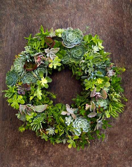 succulentwreath1